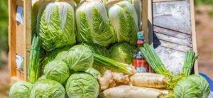 Kimchi & Sauerkraut