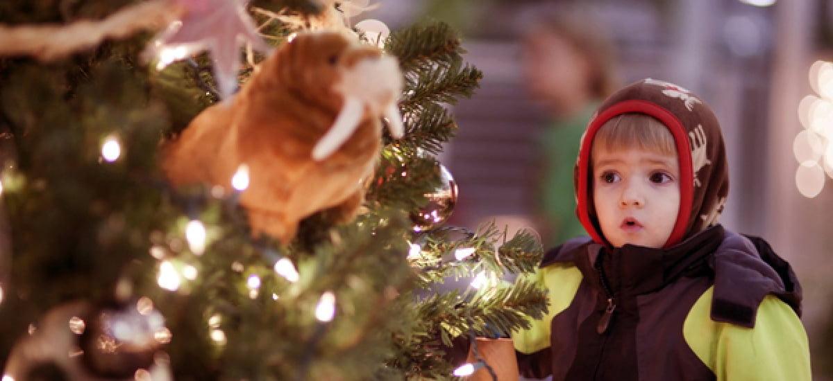 Charles Paddock Holiday Magic